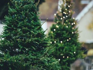 christmas tree holiday traditions winter bucket list
